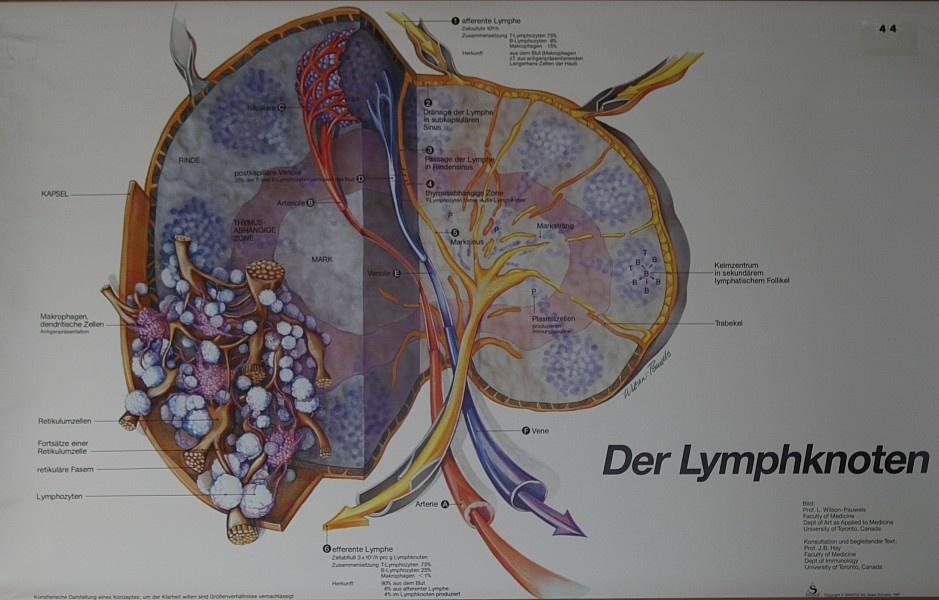 Krankenhausmuseum Bielefeld e.V. - \